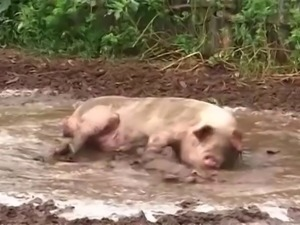 Porky s.